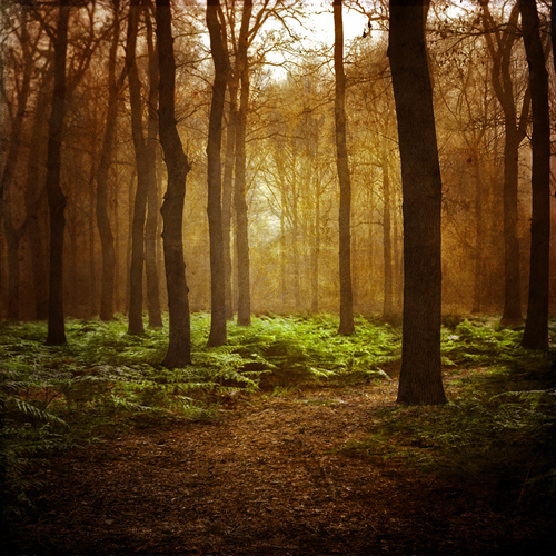 Foresta-alberi